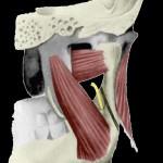 trait d'ostéotomie par rapport au nerf